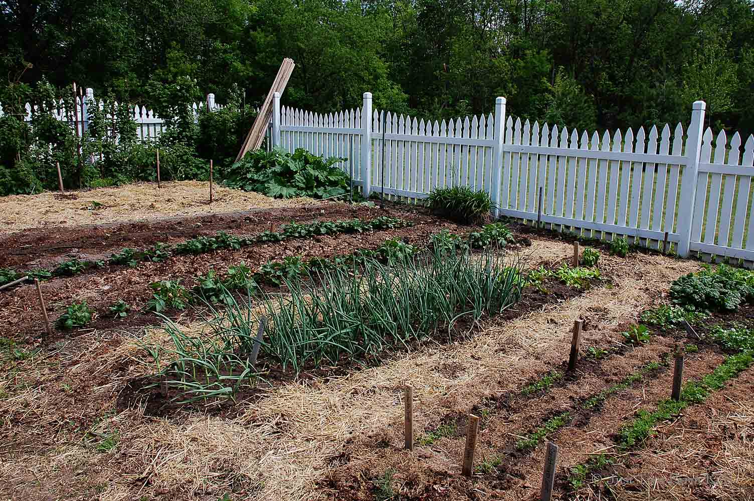 i - Vegetable Garden Ideas For Minnesota