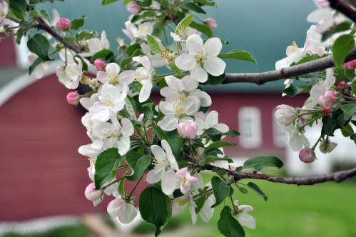 apple1a