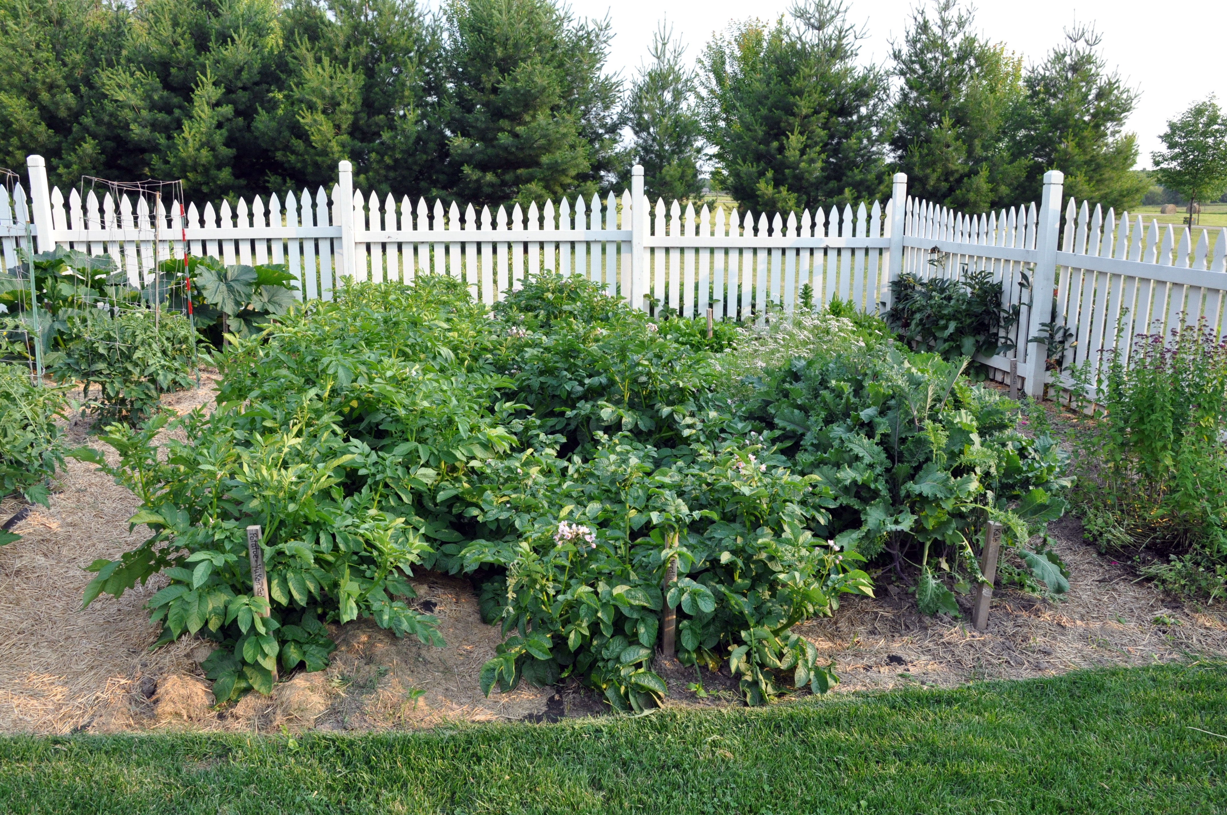 Potatoes Block Planting Potatoes